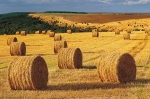 ws_Harvest_Field_Hay_Bales_Forest_1920x1200 - Республика Татарстан